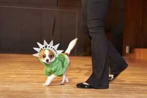 FIT Pet Fashion Show 2013. Photo: Time Out NY-Jean Cumbo