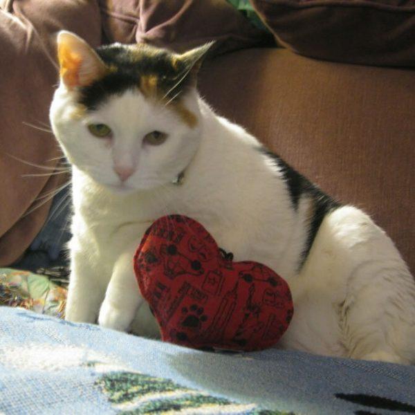 Disney with her catnip toy!